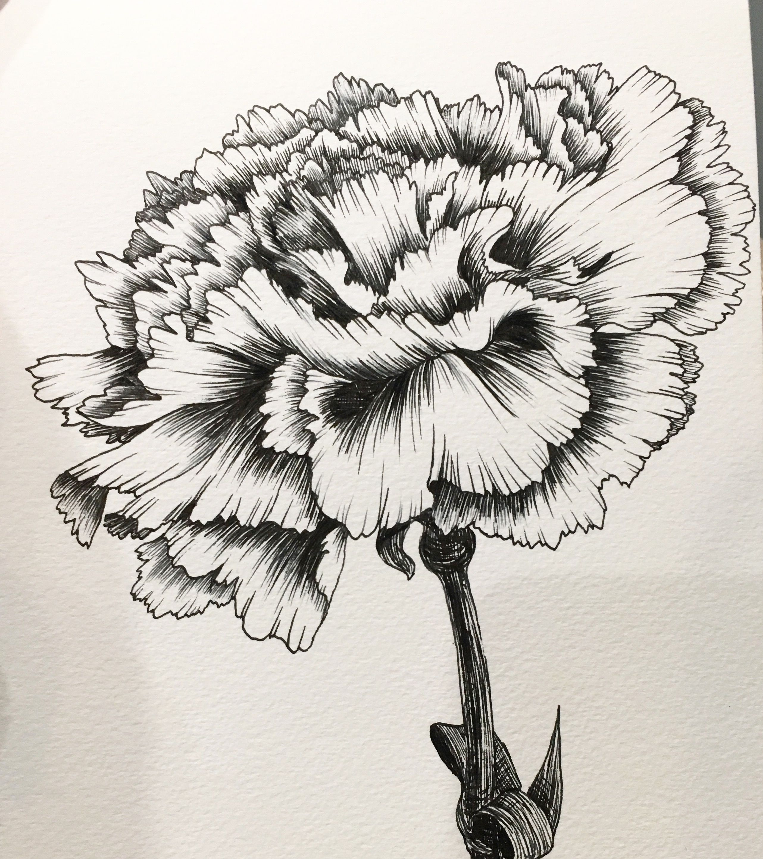 Hand Drawing By Hanna Chung A Carnation Carnation Drawing Floral Tattoo Sleeve Carnation Tattoo