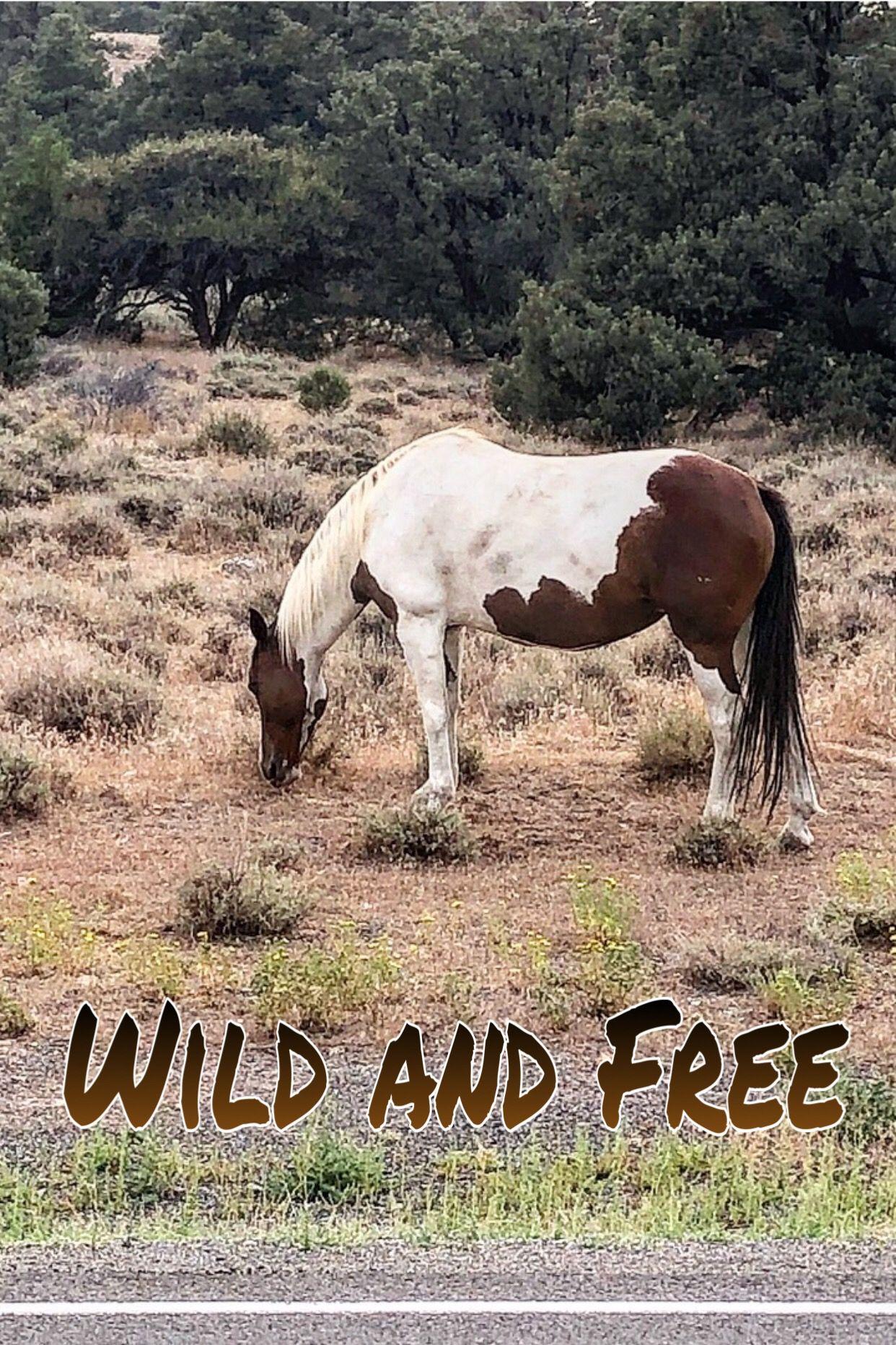 Mustang northernnevada wildandfree virginiacity