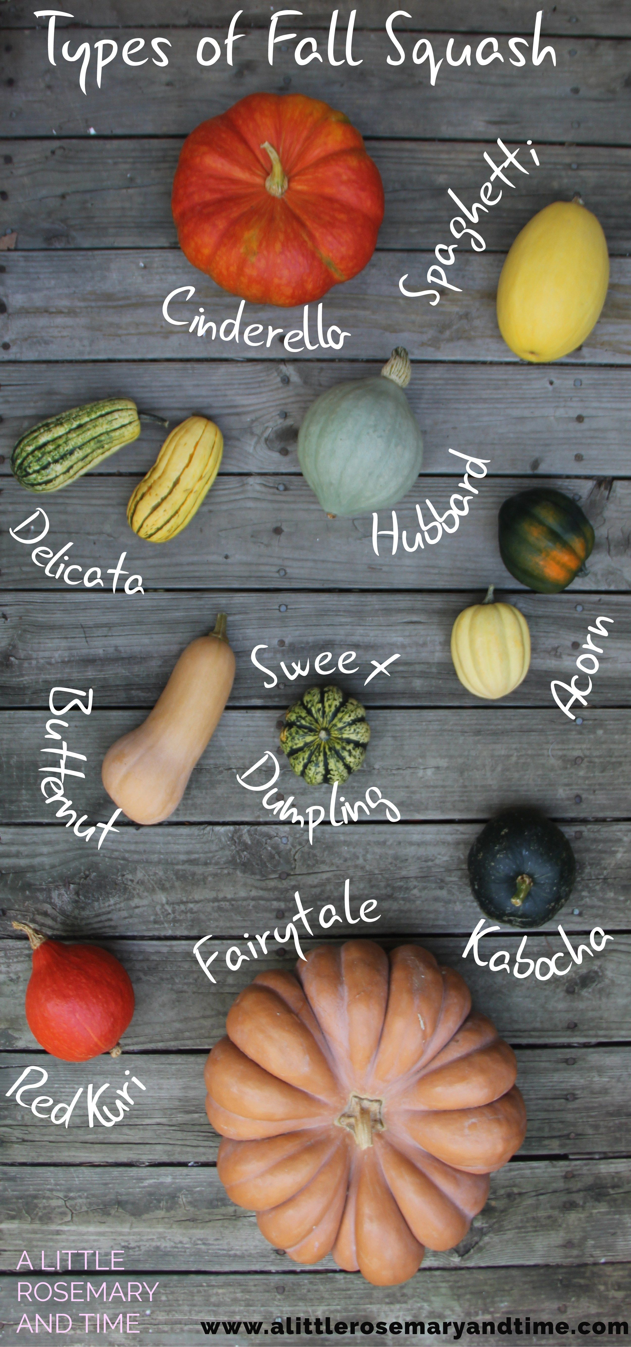 types of fall squash and how to use them potato varieties