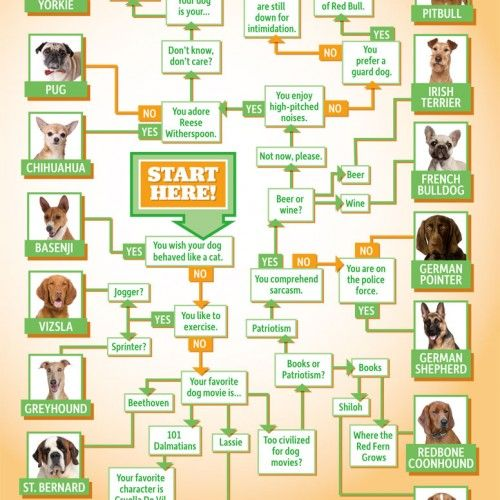 Which Dog Breed Is Right For Me Infographic Doggyloot Dog Breed Selector Dog Breeds Best Dog Breeds