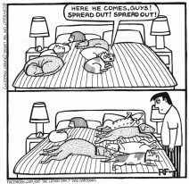 Dog In Bed Comic Bed Dog Mination Cartoon Versus Reality