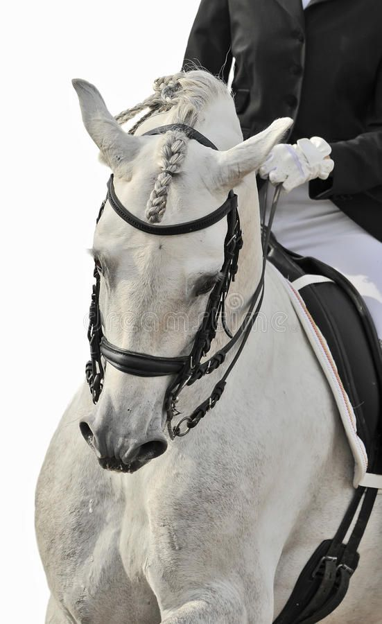 White horse dressage. White andalusian horse isolated dressage , #AD, #horse, #White, #dressage, #isolated, #andalusian #ad