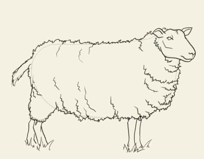 Line Drawing Images Of Sheep : Drawing and painting sheep how to draw