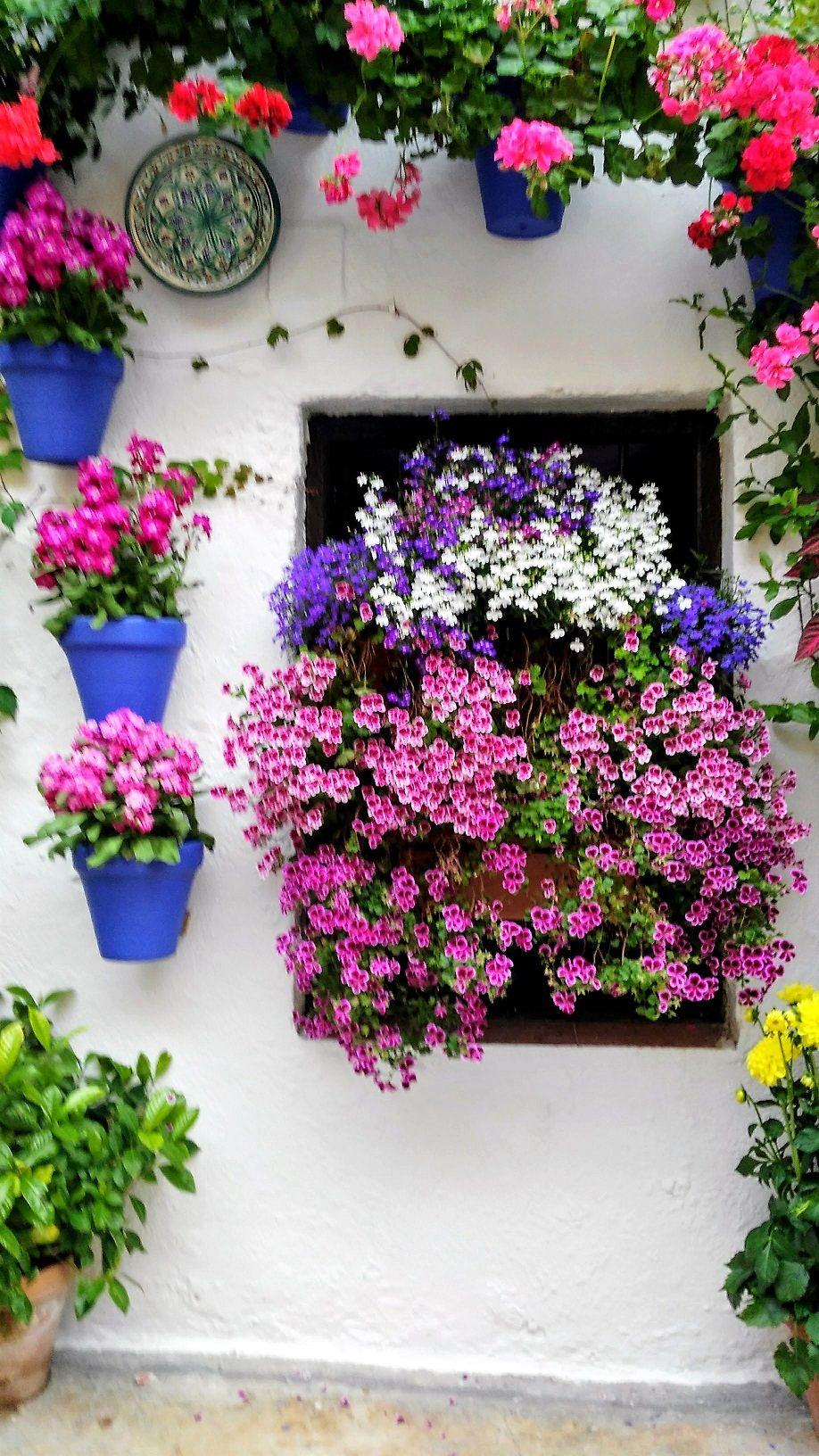 Córdoba Spain Patios Cordobeses Manualidades De Jardín Arreglos De Flores Blancas