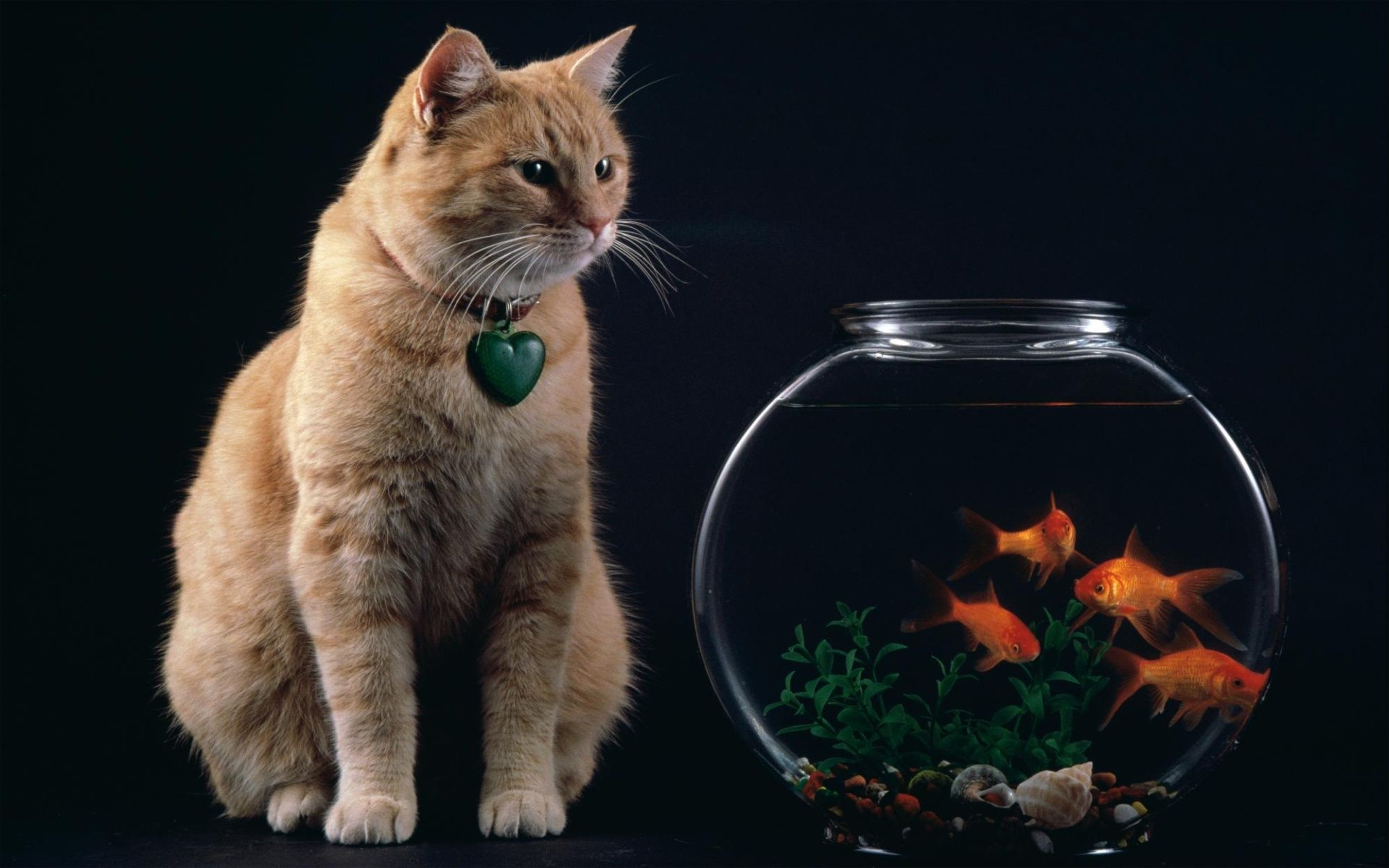 1920X1200 Cat And Fish Bowl Desktop Pc And Mac Wallpaper