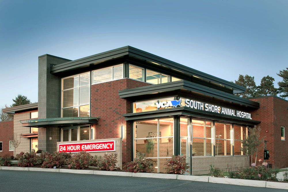 Vca South Shore Animal Hospital Designed By Animal Arts Design Medical Clinic Design Hospital Design Veterinary Hospital
