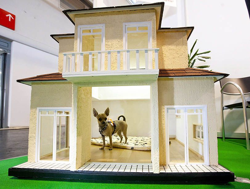 The Week In Pictures Luxury Dog House Dog Mansion Dog Houses