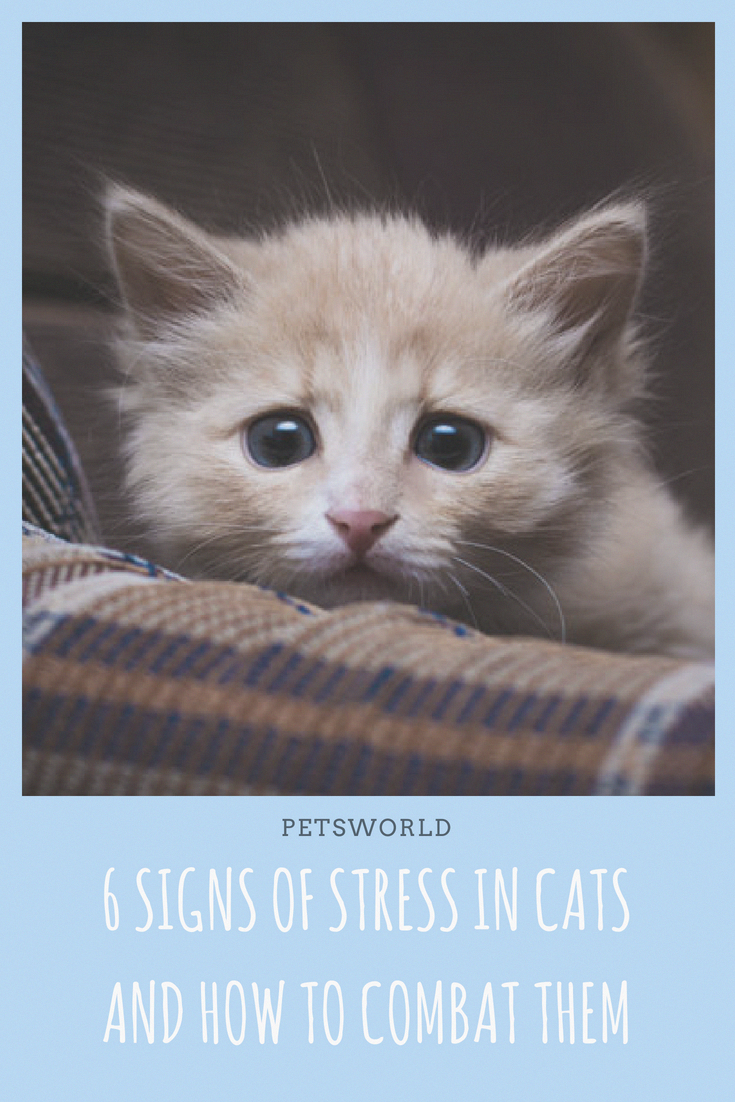 Do You Know Signs Of Stress In A Cat Are Very Different From The Ones Displayed In Humans Petsworld Cats Catsofinstagram Cat Behavior Kittens Funny Cats