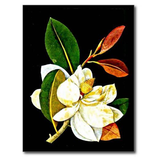 Postcard-Botanical Art-Mary Delany 1