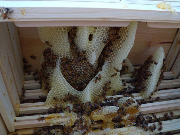 How to Attract Honey Bees to an Empty Top Bar Hive Raising bees - fresh apiary blueprint examples