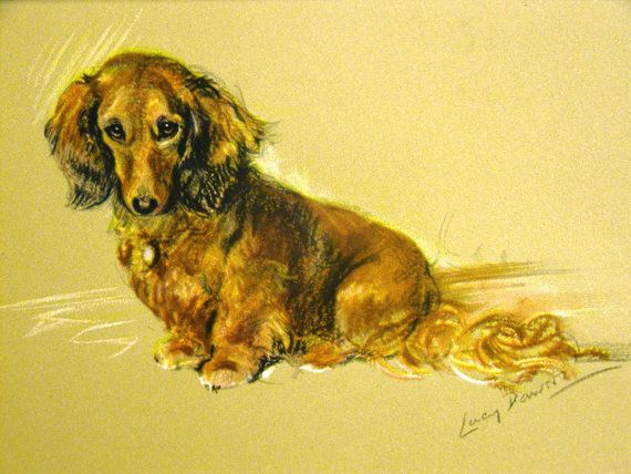 Lucy Dawson Print 1946 Beautiful Red Long Haired Dachshund
