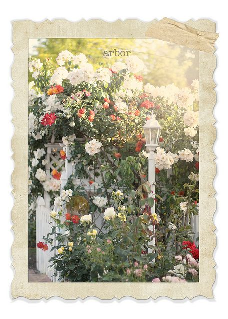 the arbor by lucia and mapp, via Flickr