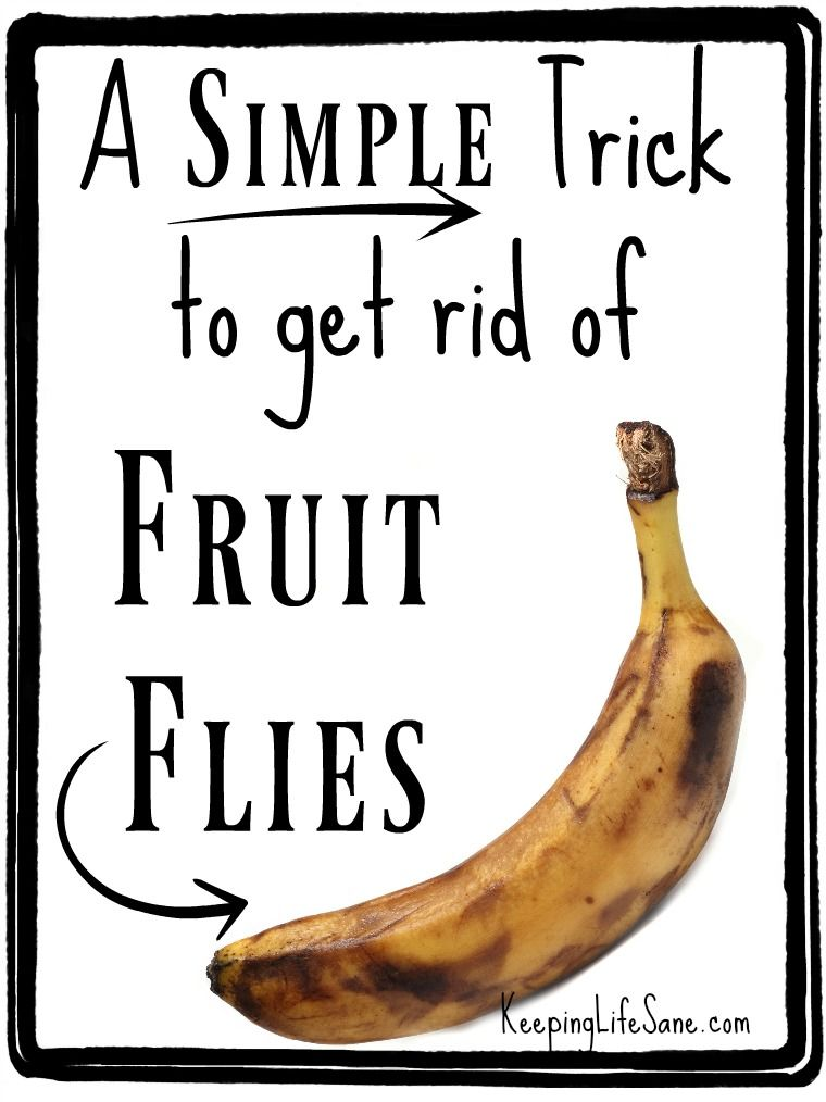 How To Get Rid Of Fruit Flies FAST!!