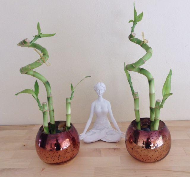 El mantenimiento del bamb es muy sencillo ponerle agua for Plantas de interior para poca luz