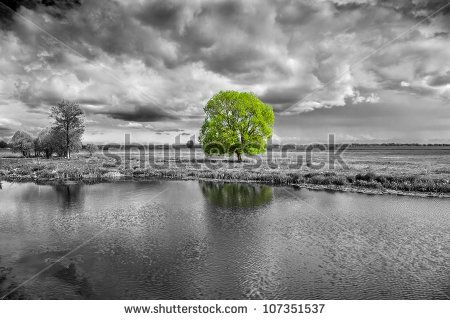 Black And White Landscape And Green Tree Stock Photo Afbeeldingen Natuur