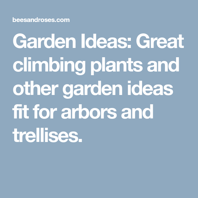 12 Best Climbing Plants for Arbors and Trellises ~ Bees ...