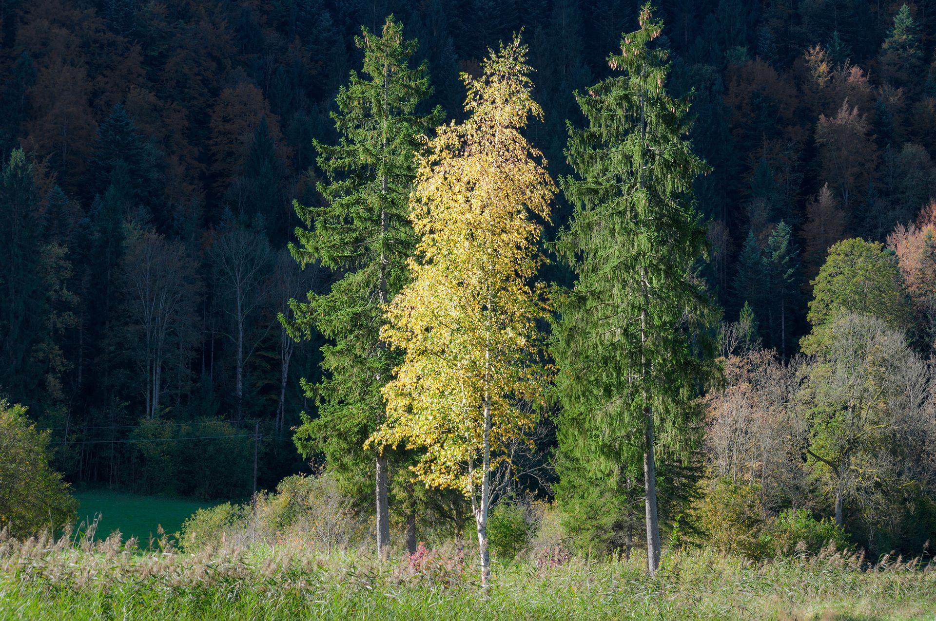 российский лес картинка