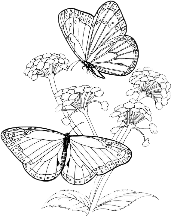 Butterfly Coloring Pages 41 Purple Kitty Flower Coloring Pages