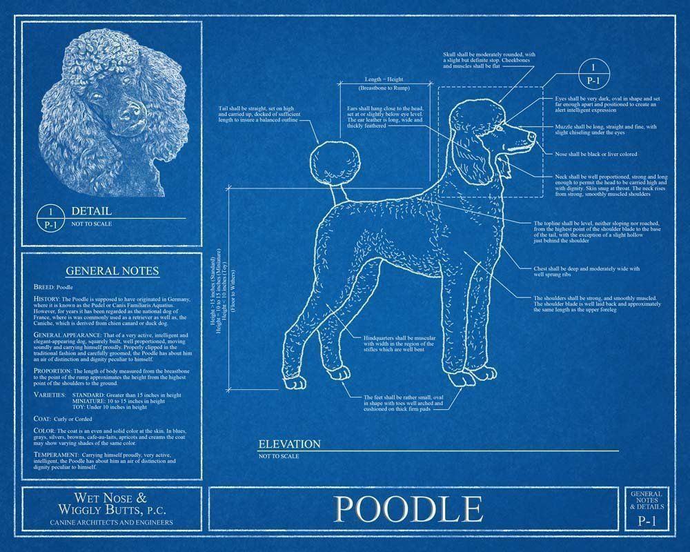 Poodle blueprint this poodle blueprint is a wonderful piece of this poodle blueprint is a wonderful piece of art that will make a great gift optional personalize this print with the name of your dogs size 16x20 malvernweather Choice Image