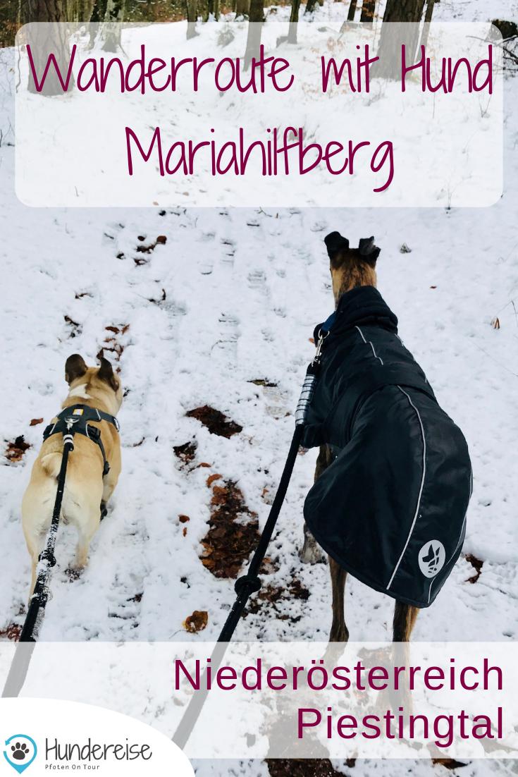 Winterwanderung Mit Hund Am Mariahilfberg Hunde Hund Unterwegs Wanderurlaub Mit Hund