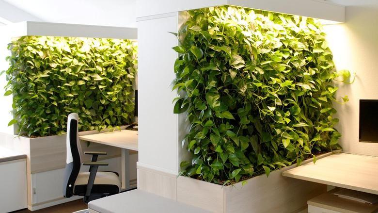 Efeutute pothos monstera die top ten der zimmerpflanzen f r saubere luft efeututen pinterest - Wandgarten wohnzimmer ...