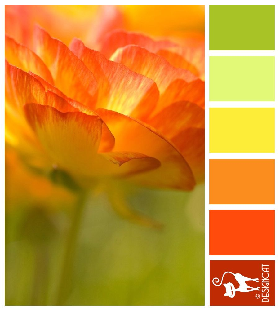 Sun Burst Green Pastel Leaf Yellow Orange Red