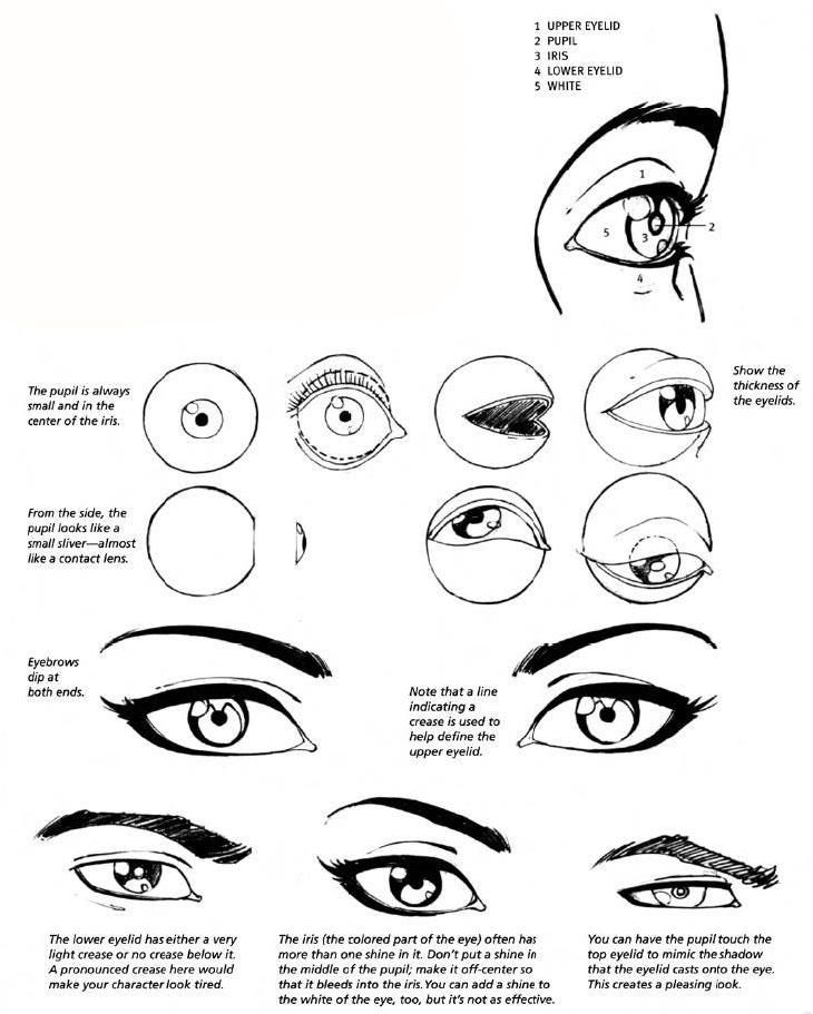 How To Draw Womans Eyes Step By Step How To Draw A Eyes And