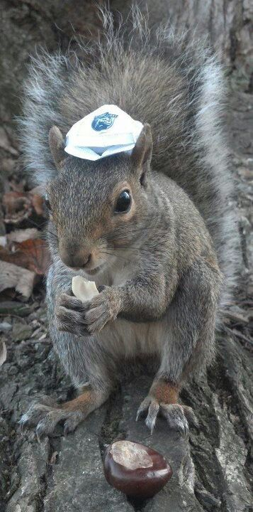 the penn state squirrel