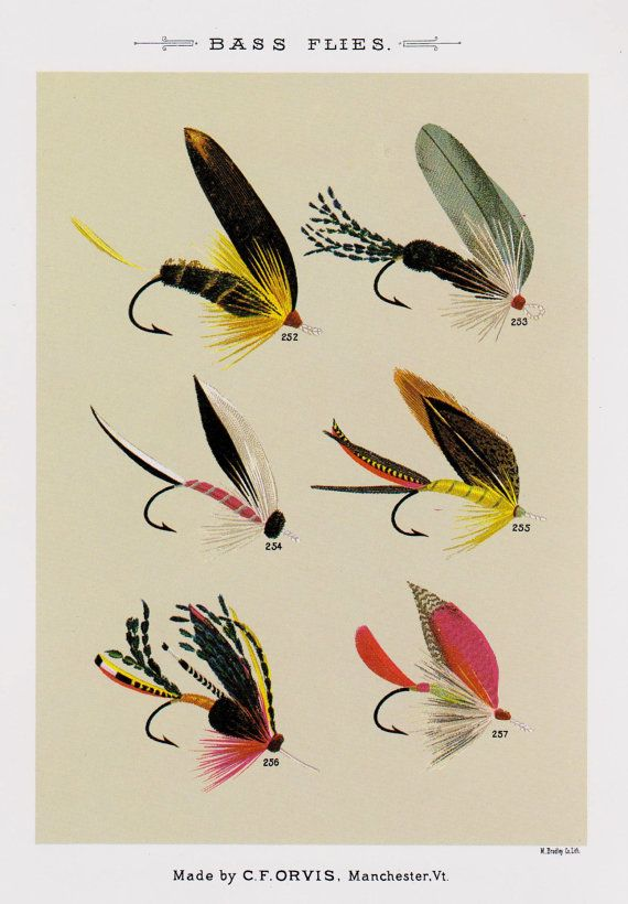 Fly Fishing Print B Flies Lure By Plaindealing