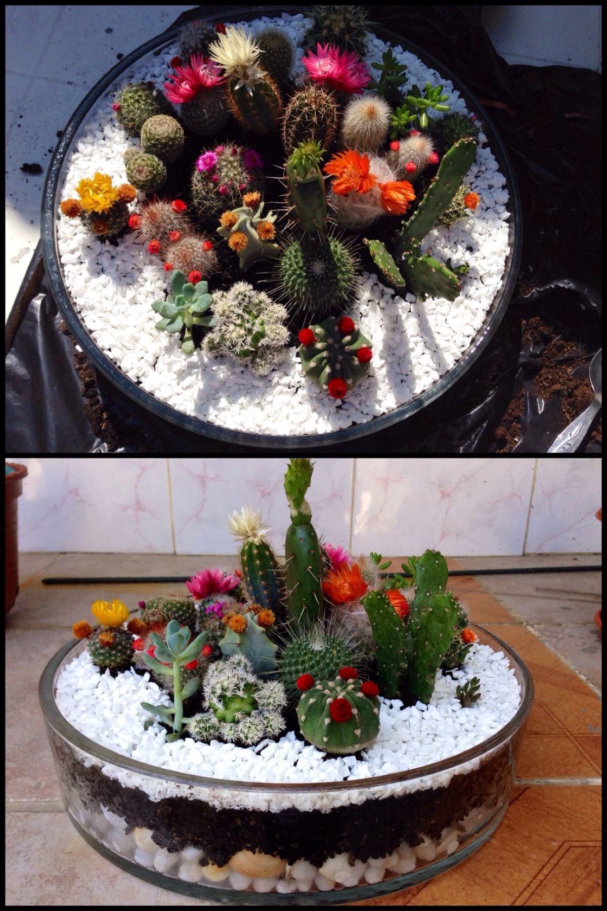 mini jardin succulentes jardins jardin de cactus et. Black Bedroom Furniture Sets. Home Design Ideas