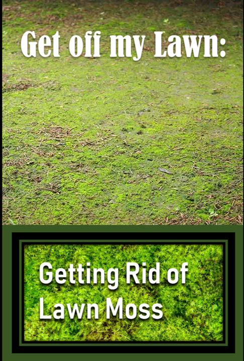 2949ed030d47a5595a038c5a7c0e20c9 - How To Get Rid Of Moss In Grass Naturally