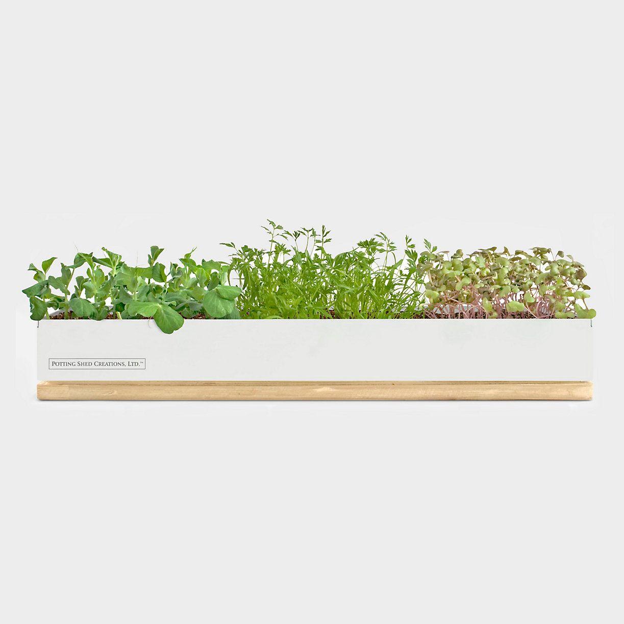 Windowsill Micro Veggie Garden in Sale SHOP Gardening at Terrain