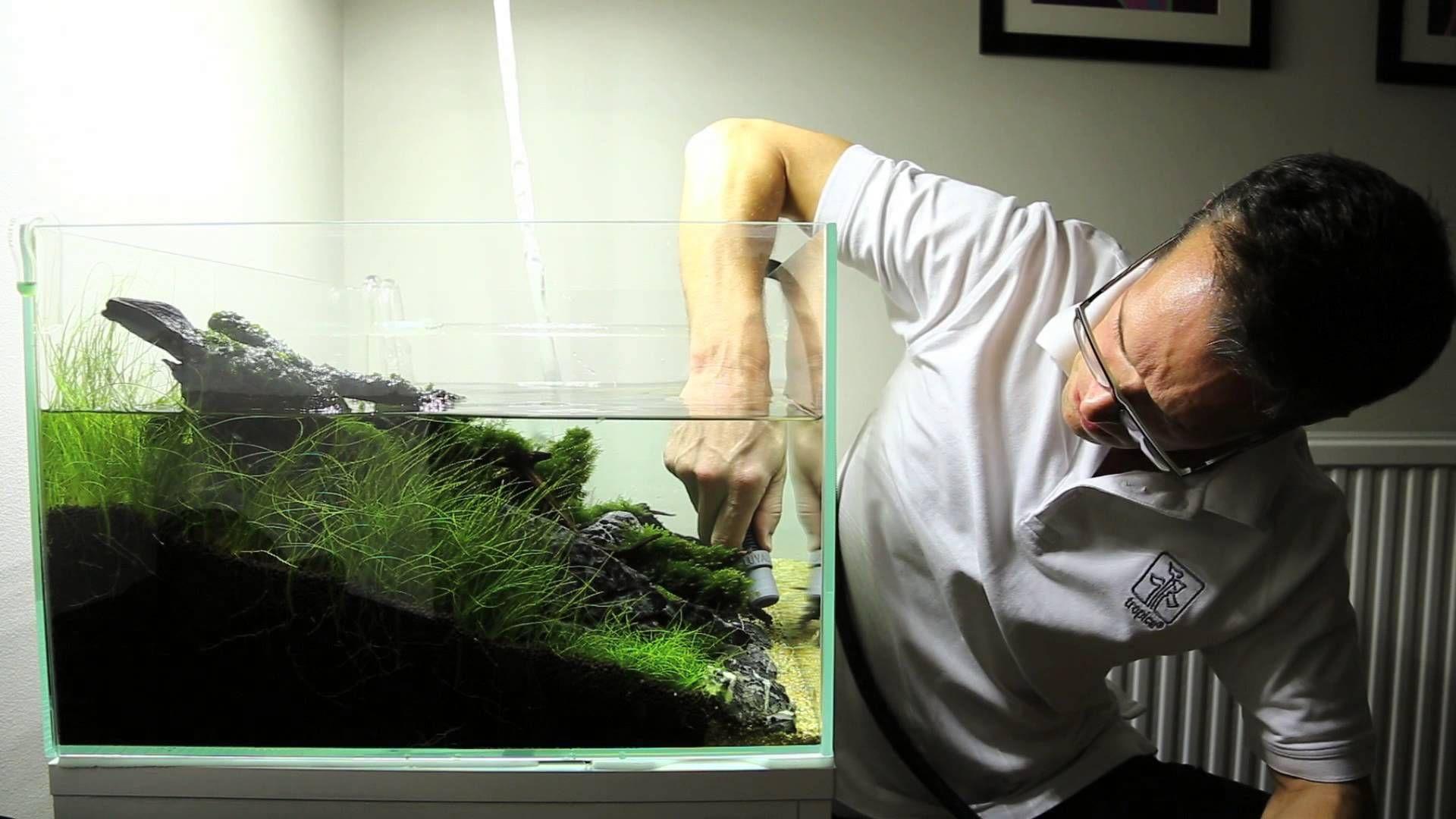 Beautiful 60cm Nature Aquarium   Basic Maintenance