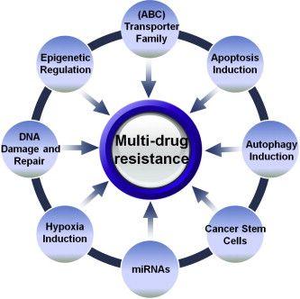 Image result for abc transporters drug resistance