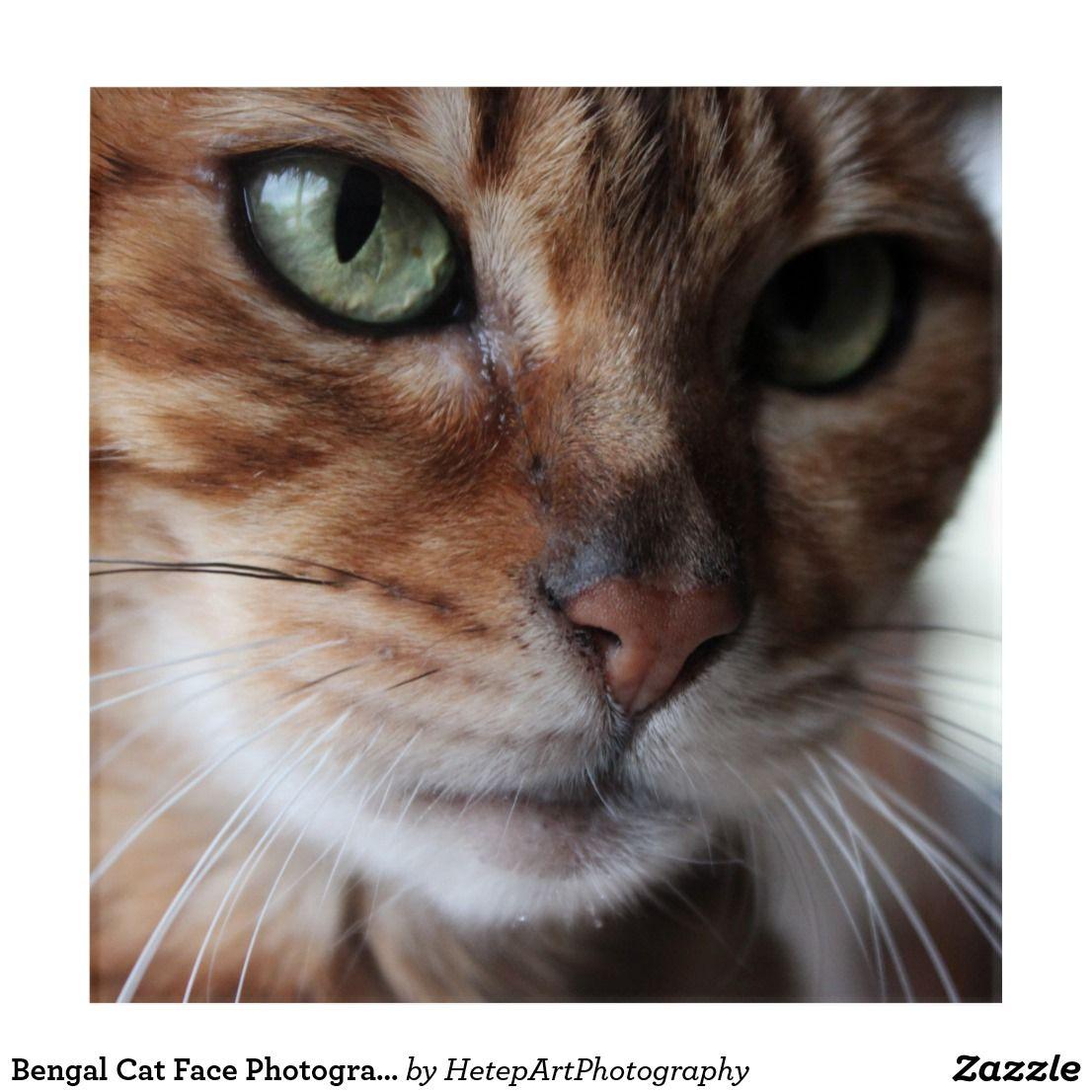 Bengal Cat Face Photograph Acrylic Wall Art Bengal cat