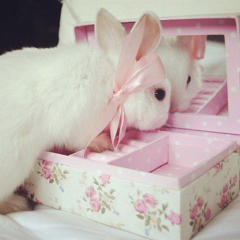 талисман картинки розовых зайцев сиамских кошек белый