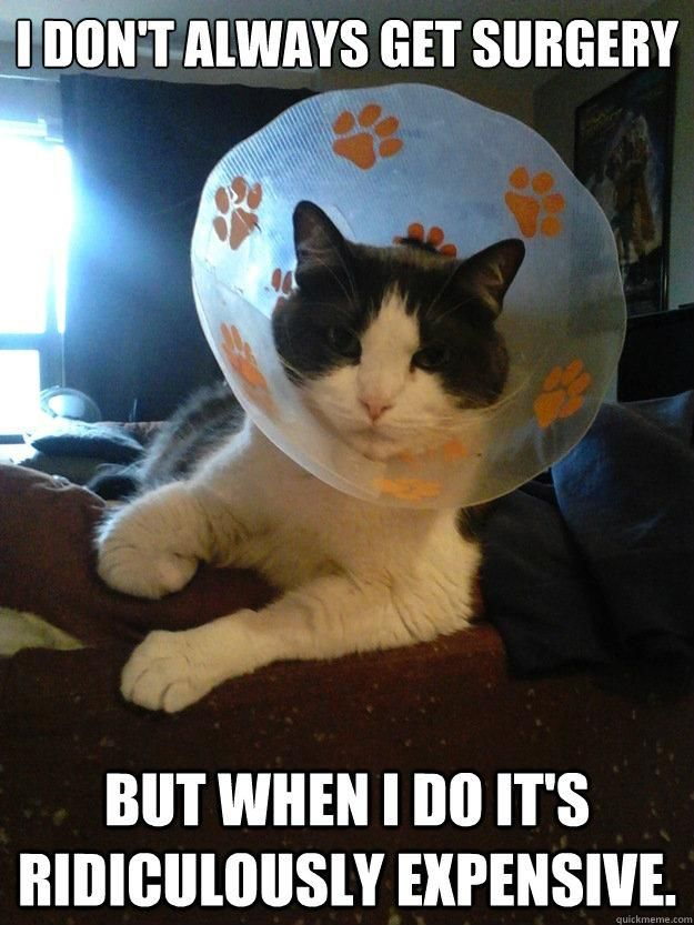 Slapcaption Com Vet Tech Humor Veterinary Humor Silly Cats