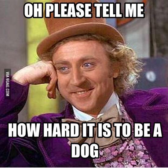 When my dog sighs