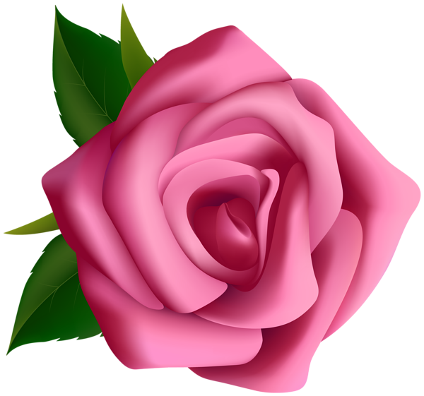 Pink Rose Clipart Png Image Rose Clipart Flower Clipart Flower Background Iphone