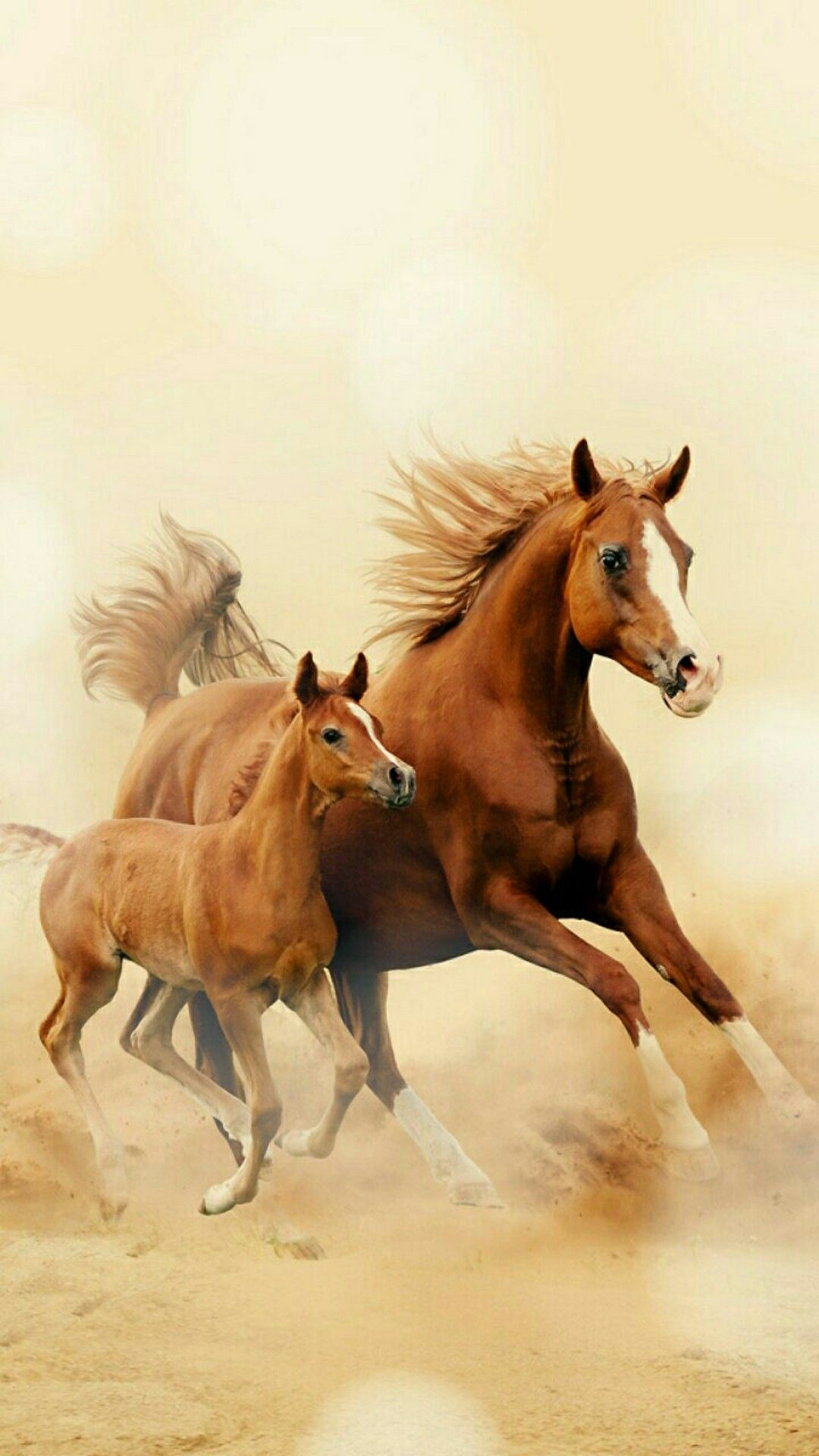 Beautiful Horse And Pony Wallpaper Horses Horse Wallpaper Show Horses