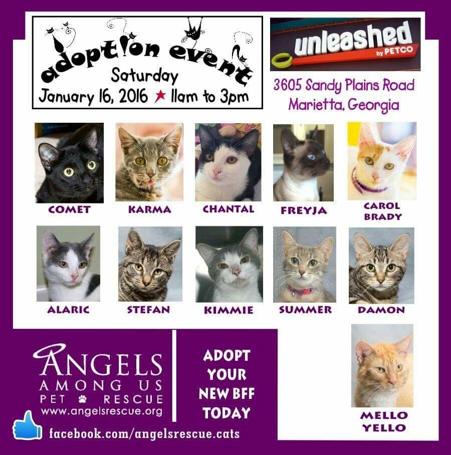 Unleashed By Petco Cat Adoption Petco Adoption