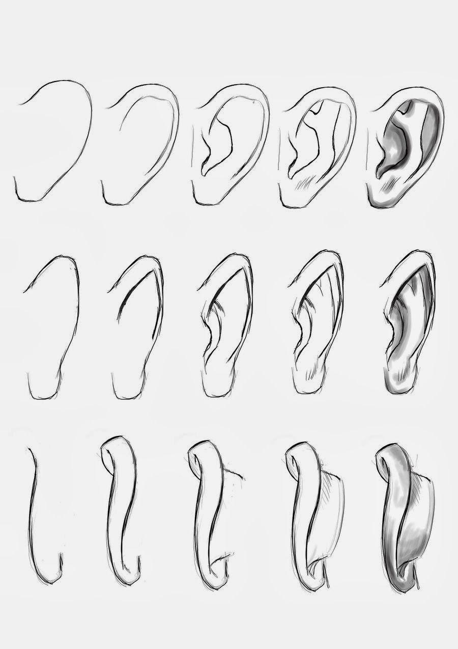 Como desenhar orelhas How to draw ears Cómo dibujar orejas | Dibujos ...