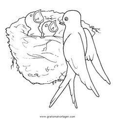 malvorlagen gratis zum ausmalen für kinder | vögel zeichnen, vogel malvorlagen