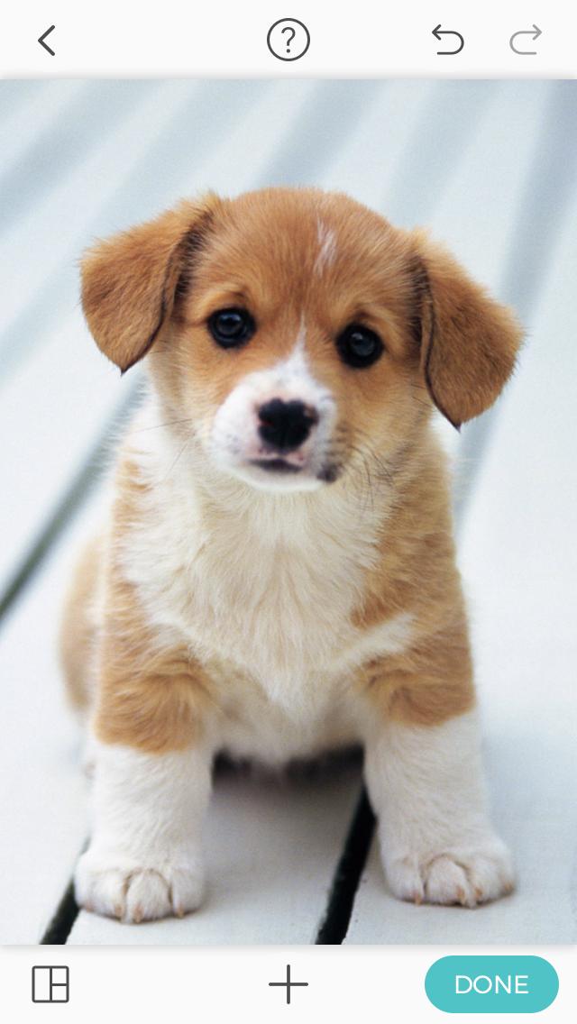 Granger To Zabini To Malfoy Dramione Blinny Nuna Ransy And Historia Cute Dog Wallpaper Cute Puppy Wallpaper Puppy Wallpaper