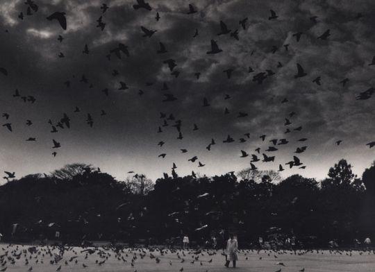 'Imprint' - Yuichi Hibi