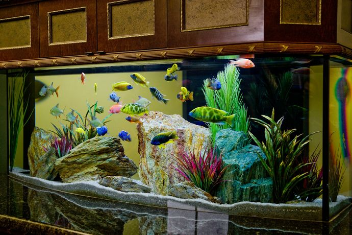 27 Cool Aquariums for Your Home product design decorations