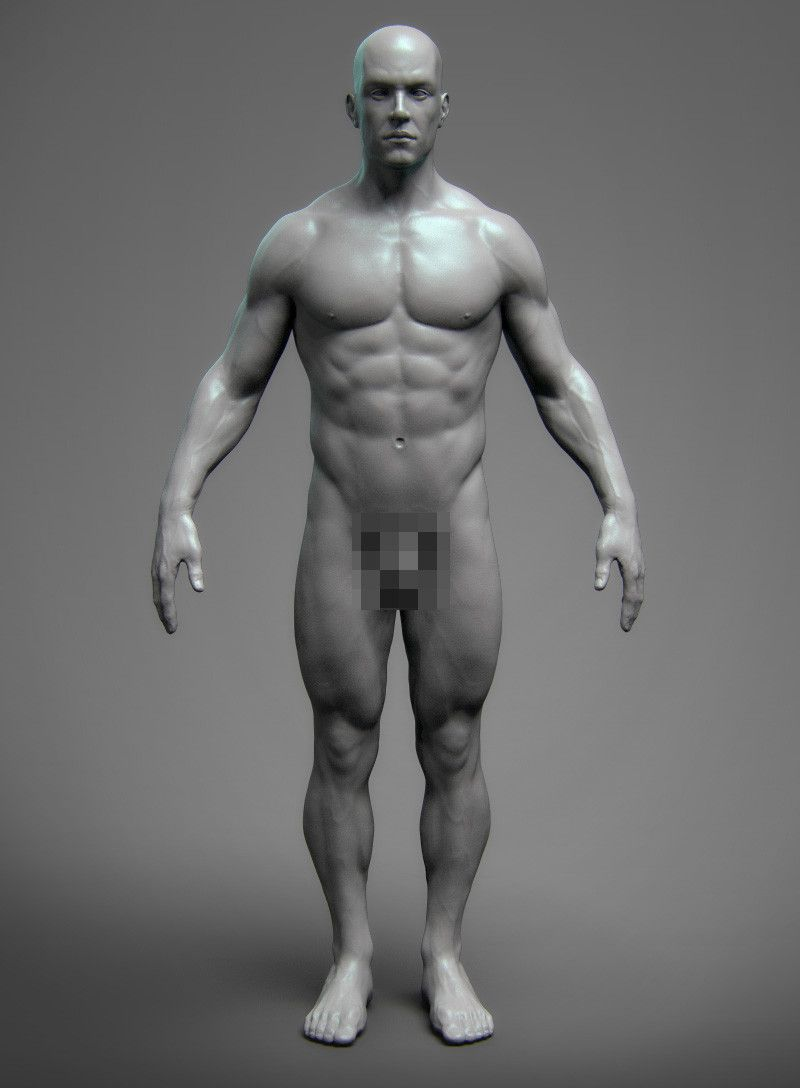 Anatomy Male Tool Reference for Artists ! by pascal ackermann ...