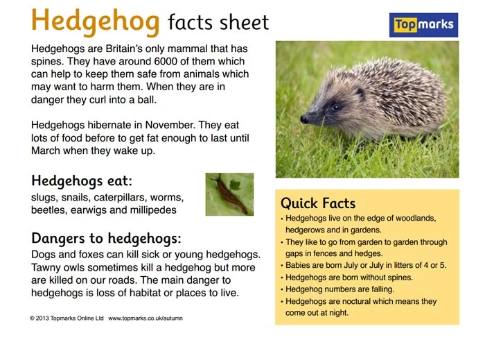 Autumn Fact Sheets | Hedgehog facts for kids, Hedgehog facts, Fact ...