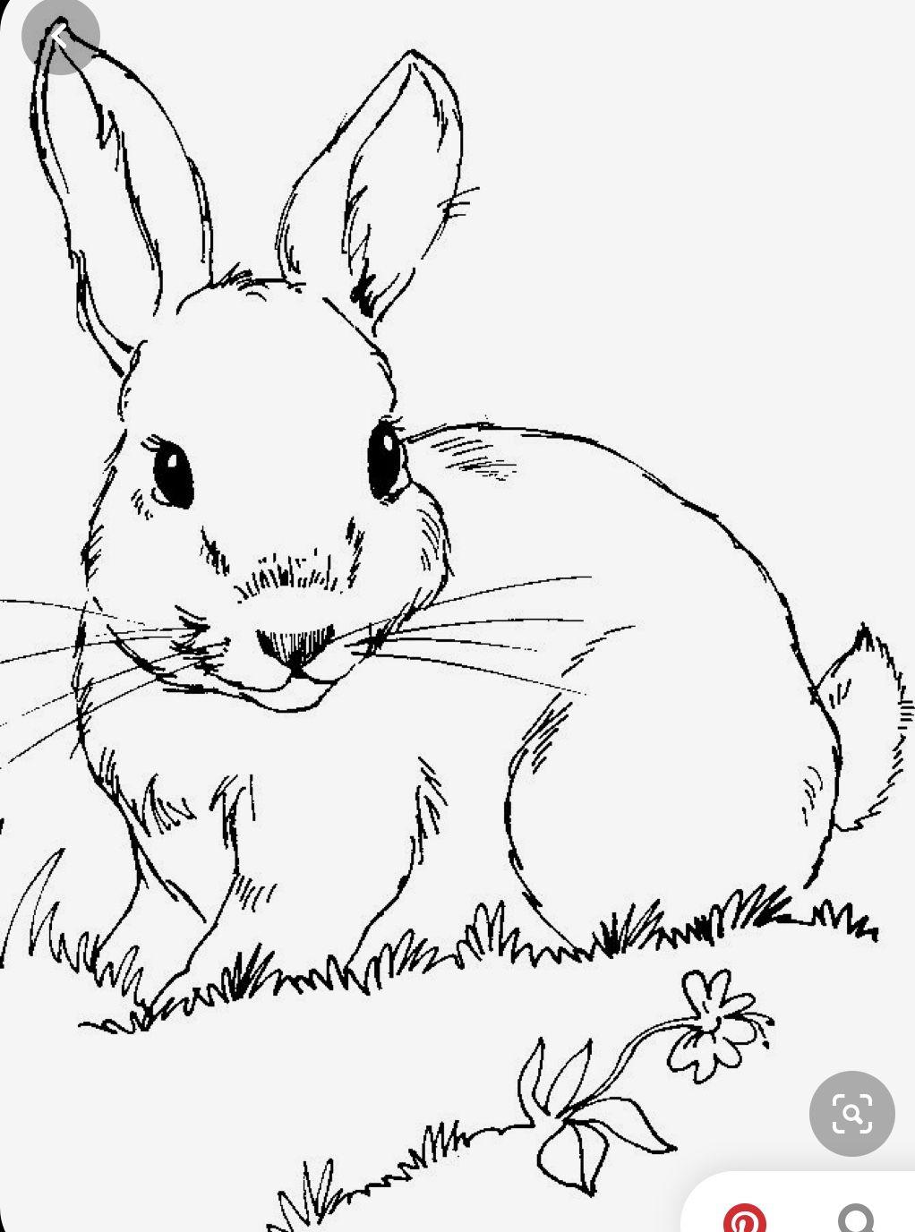 Pin Von Matt Taylor Auf Paint Party Ideas Malvorlage Hase Ostern Zeichnung Osterhase Malen