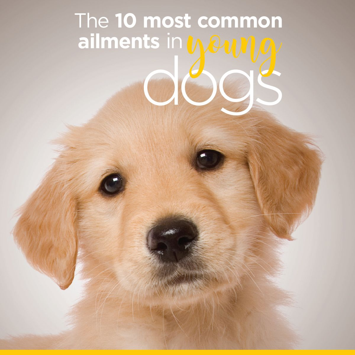Are You A First Time Dog Owner Check Out These Top 10 Health